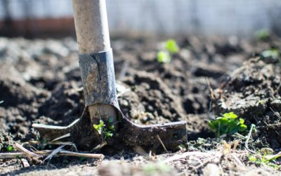 What does it mean to grow organically?